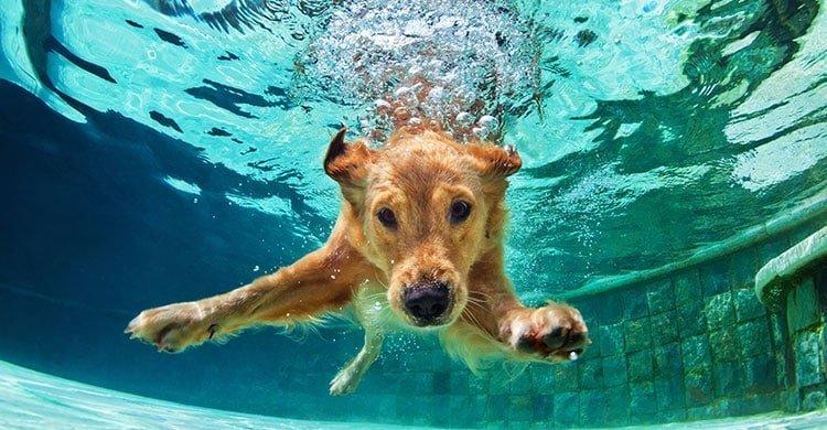 pets pool need know